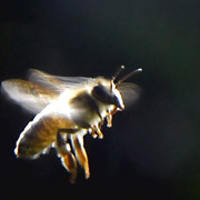 ¿Qué pasa con las abejas!?